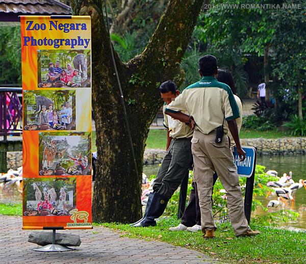zoo-staff-lakeside